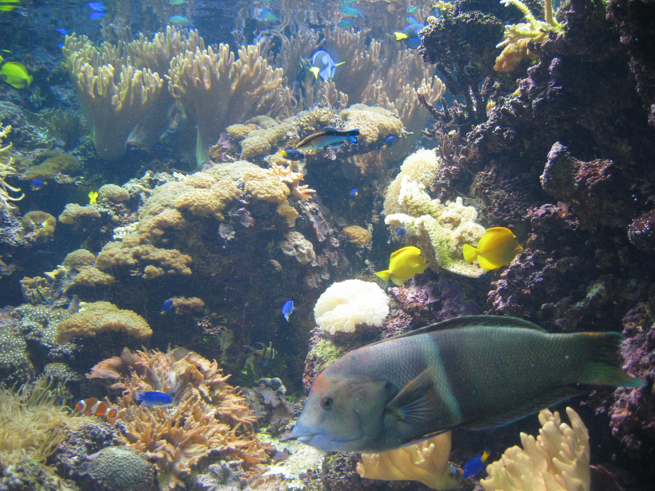 Aquarium Maui