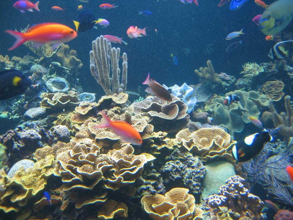 Aquarium store long island long island aquarium for Freshwater fish stores